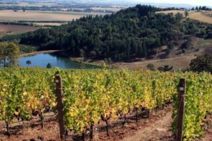 St. Innocent's Momtazi Vineyard (Source: St. Innocent Winery)